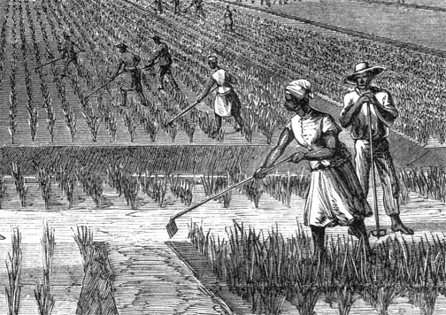 The Enslaved People of the Lowcountry